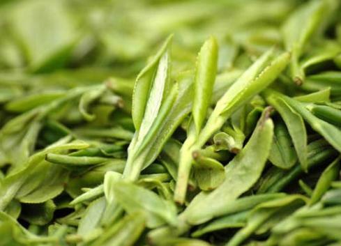 龙井茶有哪些种类?