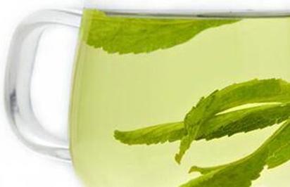 甜菊叶茶的功效与作用是什么?