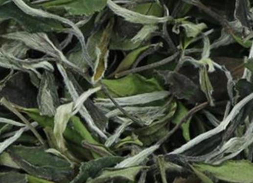 """俗话说""""龙生九子不成龙,各有所好。""""福鼎白茶树上诞生的茶叶自然有着属于自己的名字和特征,白毫银针"""