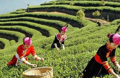 坦洋工夫茶的历史你知道吗?