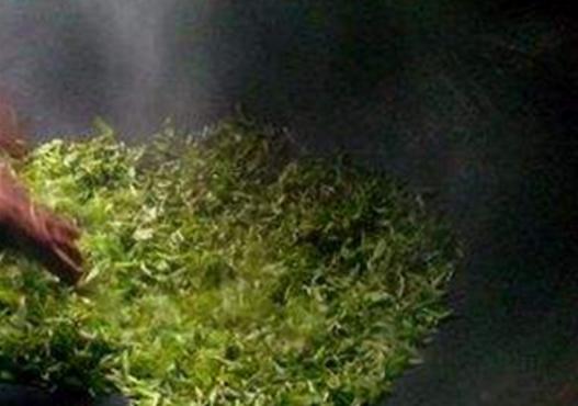 古丈毛尖碧螺春属于什么茶?
