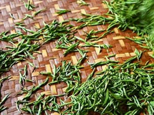 都匀毛尖碧螺春属于什么茶?