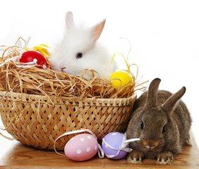 复活节是西方国家的一个重要的节日。每当节日来临,信教的,不信教的都要庆贺一番。Easter(复活节)一词